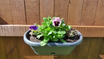 And a little pot of pansies