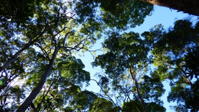 There are koalas up there somewhere
