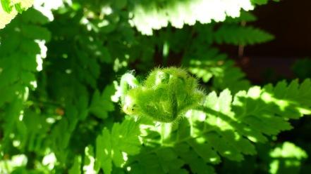Growth on one fern
