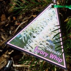 Ivory Whip