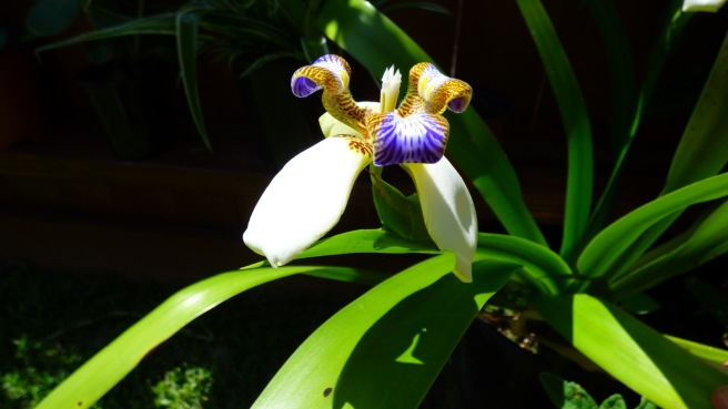 The Iris 'stepping out'