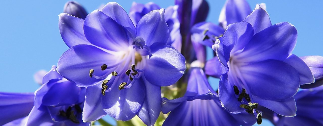 Blue or Purple