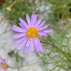 My delicate little daisy missing a petal.