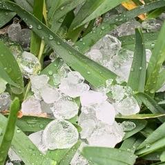 Ice wove through the grass.